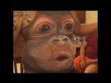 году обезьяны посвящается