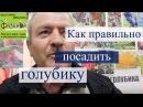 Советы по посадке голубики. Выставка-ярмарка Фазенда 2016.