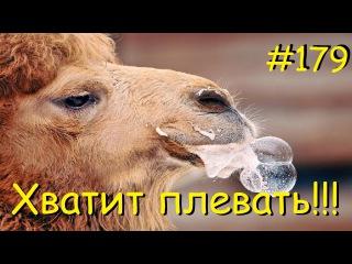 Panzar s1e179 Хватит плевать!!!