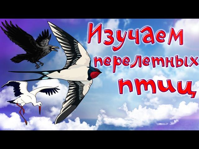 Мультфильм про перелетных птиц. Развивающие мультики для детей до 4-х лет.