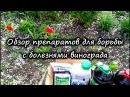 Препараты для борьбы с болезнями винограда схема обработок внекорневые и корневые подкормки