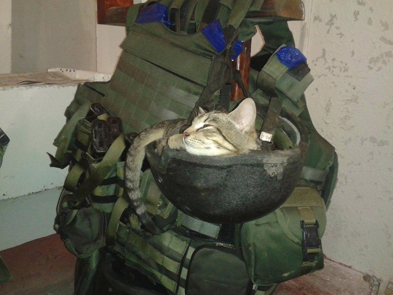 Минобороны опубликовало фото домашних любимцев, которые помогают украинским бойцам на передовой - Цензор.НЕТ 2819
