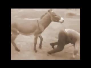 on-trahal-osla