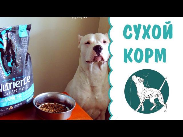 Выбор сухого корма для собак   кормление собак   сухой корм для собак