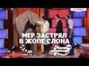 Мэр Застрял в Жопе Слона | Мамахохотала | НЛО TV