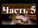 видео приколи про котов часть 5