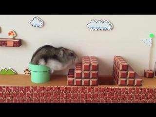 Хомарио: японский хомяк прошел уровень в Super Mario