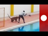 Leopard runs wild around India school, 4 injured