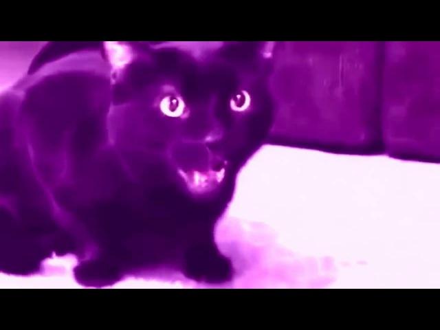 MADEVIL - Поющий кот |MMV 87
