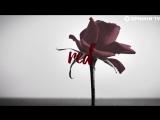 Dada, Paul Harris &amp Dragonette - Red Heart Black