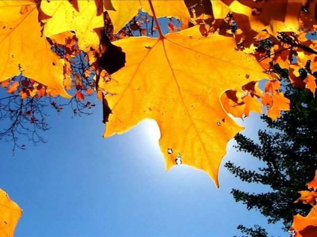 Красива осінь вишиває клени