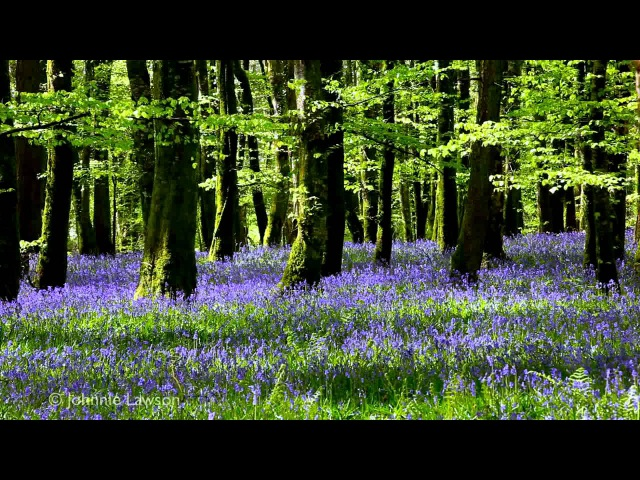 8 Hour Nature Sound Relaxation-Soothing Forest Birds Singing-Relaxing Sleep Sounds-Without Music