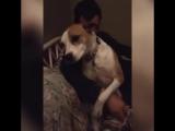 Собака-обнимака. Грустный пёс, который любит обниматься ))