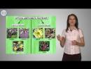 36. Биология 6кл. Систематика Цветковых растений