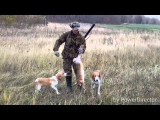 Охота с эстонской гончей 6 декабря 2015 г.