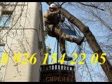 Удаление деревьев. Промышленные альпинисты