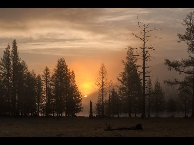 Prelude No. 11 - Chris Zabriskie | Sayan RUSSIA | Dandelions MUSIC