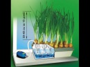 ➽Выращивание зелёного лука на гидропонике | Зеленый лук круглый год | Луковое счастье