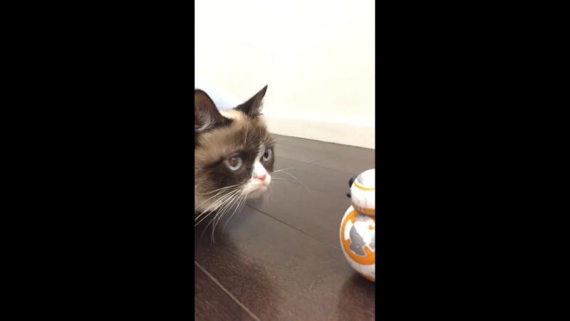BB-8 Robotu ve Kedi