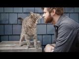 агрессивное поведение кошки | что делать? как отучить кусаться?