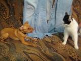 Собака убийца против кота!!!