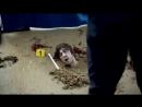 Убийства в Сен-Мало . Анонс, смотрите трейлер фильма.