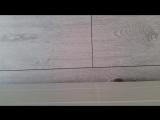Рой подмигивает из-под кровати