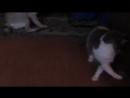 Ляля играет с прожектором