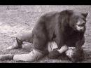 Most Shocking Bear Attacks On Human   Crazy Animal Attack People Man,Woman,Girl,Boy