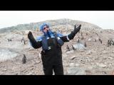 Как пингвины от оперы убегали