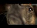 Животный интеллект Серия 1 Органы чувств BBC 2014
