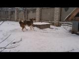 Пёс Цезарь.