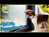 Животные - Коты и собаки врезаются в стеклянные двери Врезаются в окна