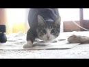 Все танцуют с котами 3