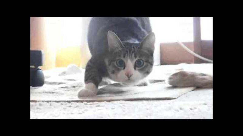 Все танцуют с котами! :3