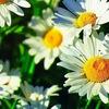 Лето.томск.ру - томский цветочный сайт