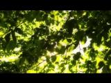 Блики солнца сквозь листву деревьев. ФУТАЖ