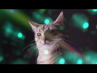 Meow Mix SongEDM Cat Remix by Ashworth