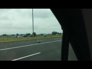 Голубь устроил гонки на скоростной трассе