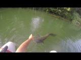 Silure en float tube au suicide duck savage gear attaque en direct 3.0 - go pro HD