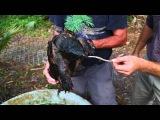Dangerous Snapping Turtles! Kamp Kenan S2 Episode 12