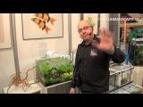 DENNERLE Scaper's - Новые аквариумные комплекты от Деннерле