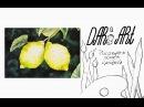 Как нарисовать лимоны на ветке акварелью! Dari_Art рисоватьМОЖЕТкаждый