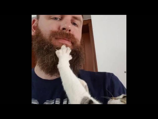 Cat massages beard