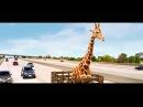 Мальчишник Часть III. Жираф