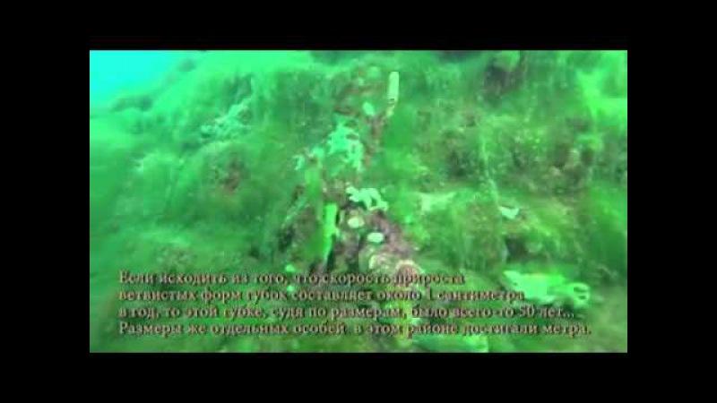Эвтрофикация Лиственичного залива озера Байкал