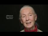 Интервью с Джейн - ВЕЛИКОБРИТАНИЯ (HUMAN)