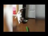 Коты и опасные огурцы :)))