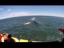 Cette énorme baleine se rapproche d'un bateau la gueule ouverte ! - vidéo Dailymotion