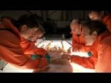 Inside Nature's Giants - The Giant Squid Full Documentary